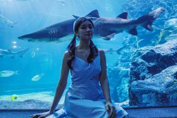 Khám phá thủy cung lớn nhất Bangkok: Sea Life Bangkok Ocean World