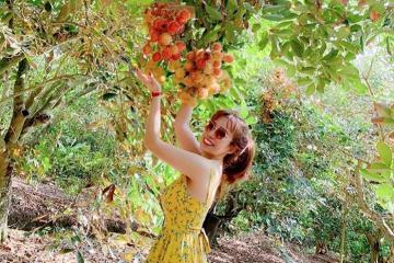 'Điểm danh' những vườn trái cây gần Sài Gòn nổi tiếng nhất (Phần 2)
