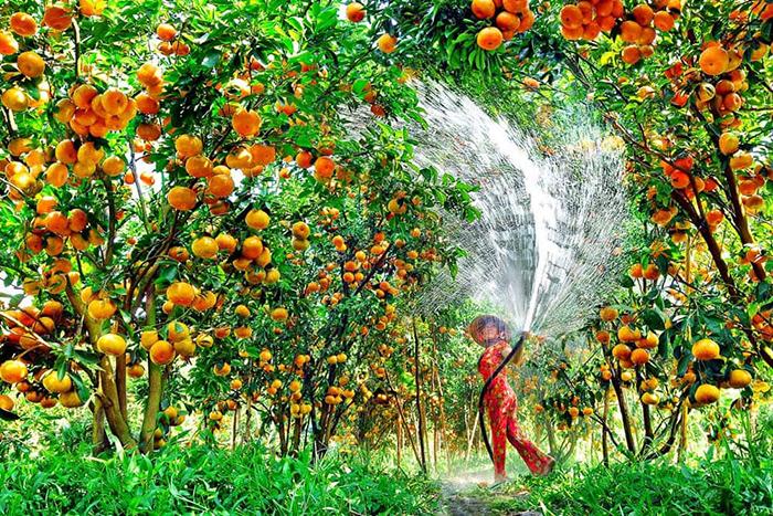 Nhanh chân check in vườn trái cây Vĩnh Kim