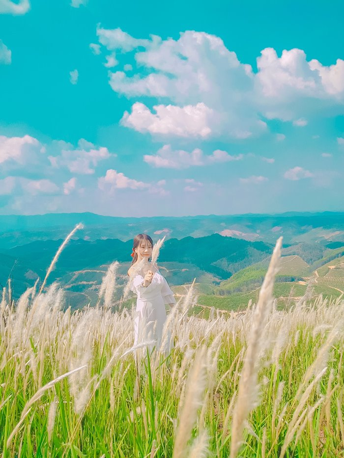 đồi cỏ tranh Đắk Nông