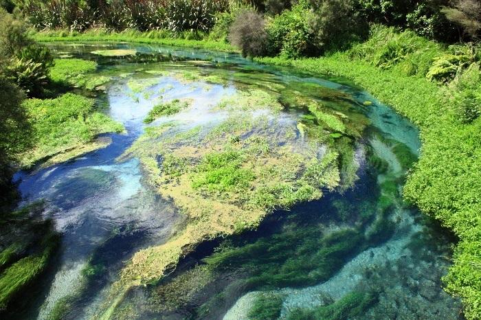 Blue Springs Te Waihou -thị trấn Matamata New Zealand