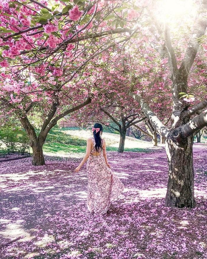 Những cây anh đào trong Brooklyn Botanic aGarden - Vườn bách thảo đẹp nhất thế giới