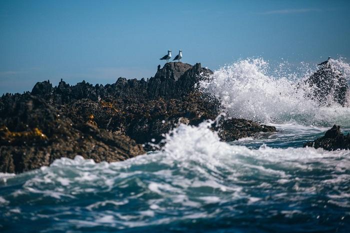 Seagulls - Stewart Island