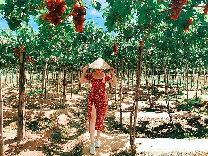 Vườn nho Ba Mọi - Địa điểm du lịch Ninh Thuận nổi tiếng