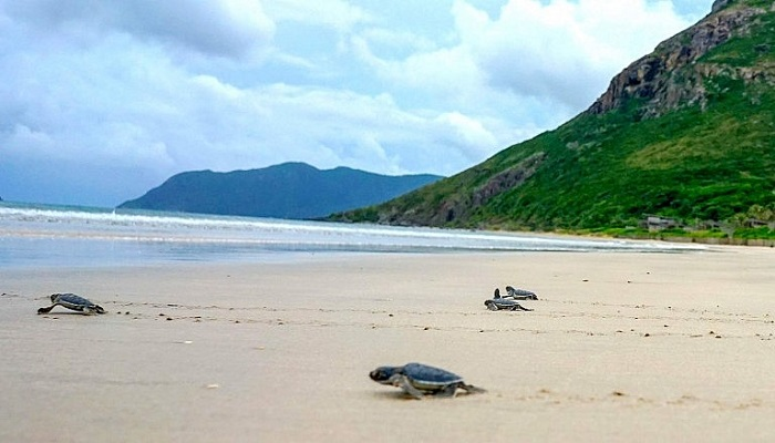 Which season is the best season for Con Dao tourism and where to go?  The deserted islands are ideal destinations in Con Dao
