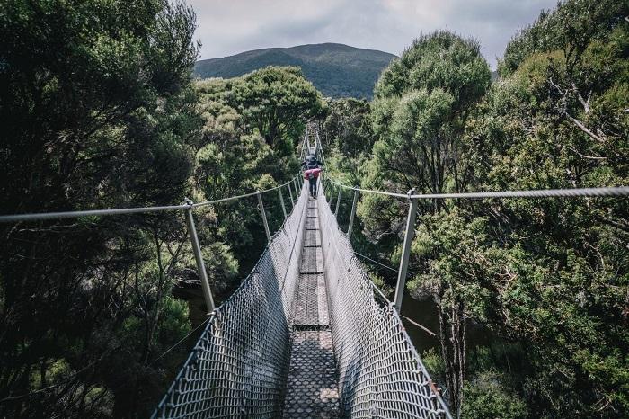 Suspension bridge over the forest walking trail - Stewart Island