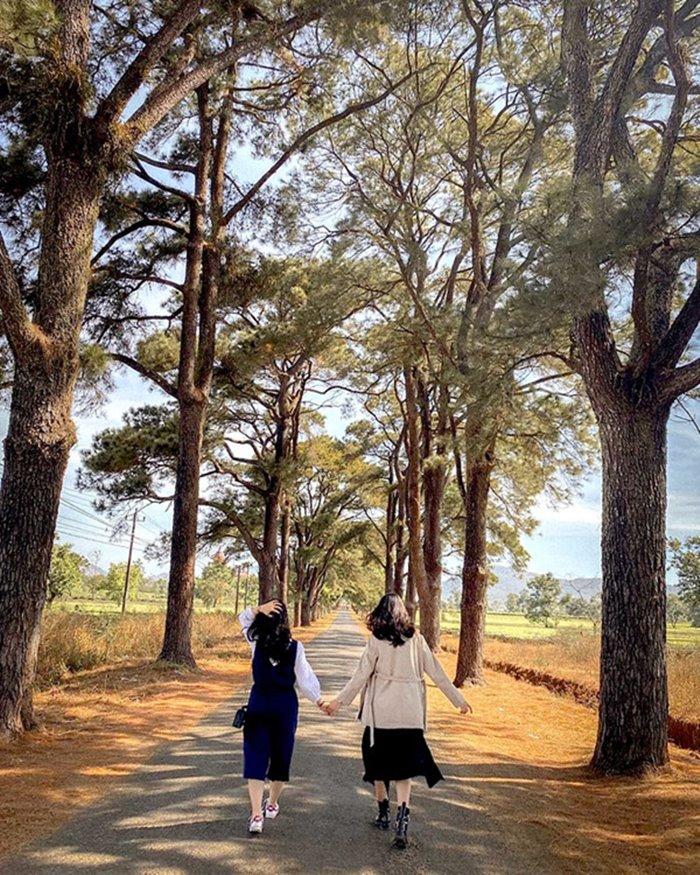 Con đường đẹp ở Gia Lai
