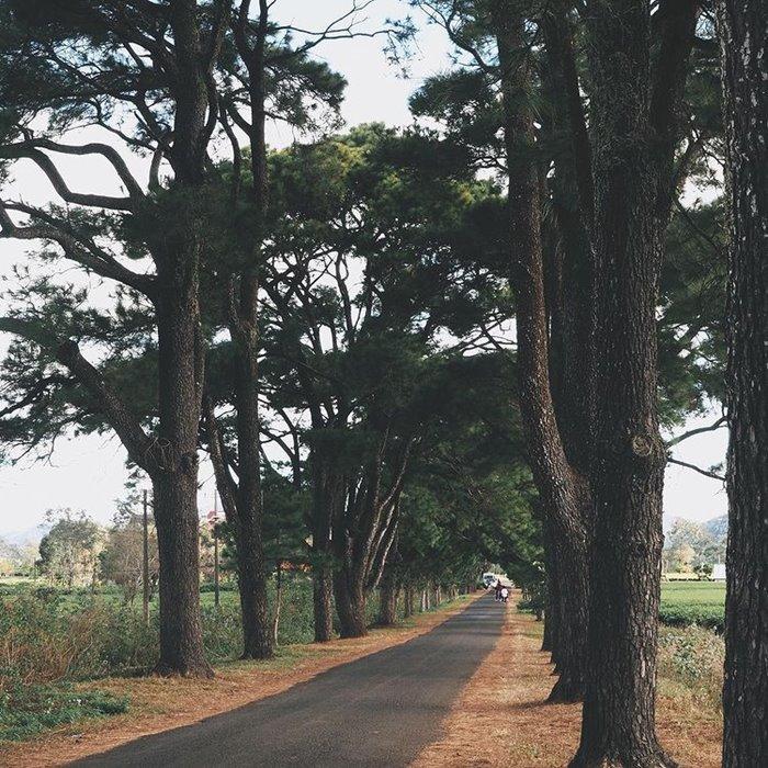 Con đường đẹp ở Gia Lai đường hàng thông