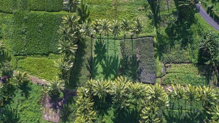 Đồn điền từ trên cao - Quần đảo Cook