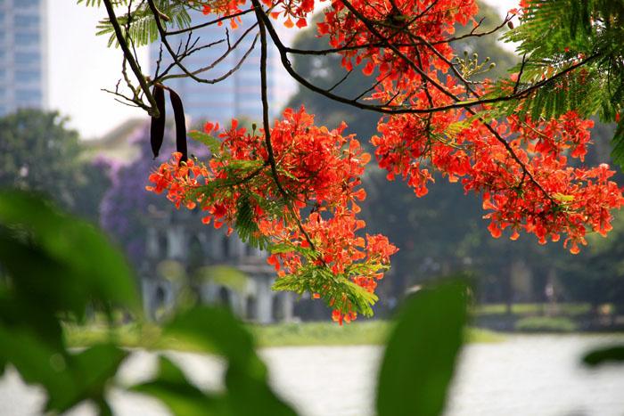 Nên đi du lịch miền Bắc mùa nào đẹp nhất - Hà Nội mùa hè