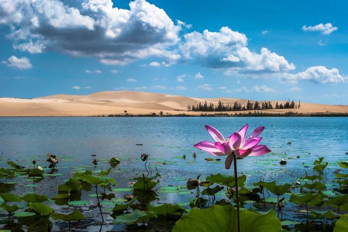 Khám phá khu du lịch Bàu Trắng - Hệ sinh vật ở Bàu Sen