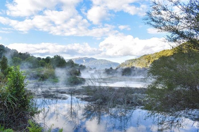 những loài thực vật quý hiếm - Thung lũng núi lửa Waimangu