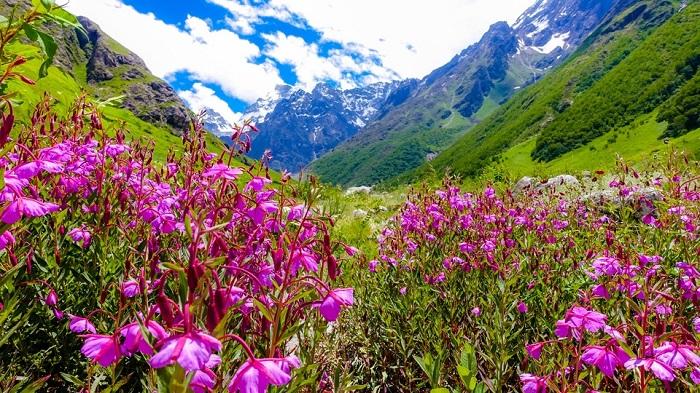 Loài hoa nở vào mùa xuân trong Vườn quốc gia Thụy Sĩ