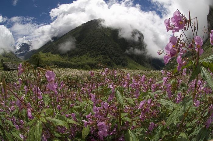 Mùa hè, tháng 7 và 8 là thời gian hoa nở nhiều nhất - Vườn quốc gia Thụy Sĩ