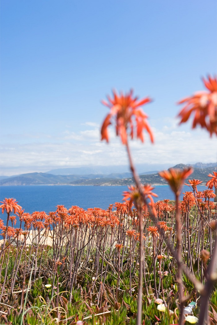 Plants on the island are rich - Corsica Island, France