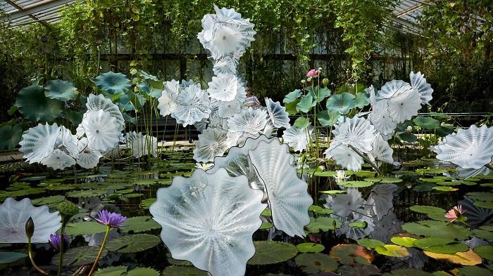 Một loài sen trong nhà kính ở Vườn bách thảo Hoàng gia Kew - Vườn bách thảo đẹp nhất thế giới
