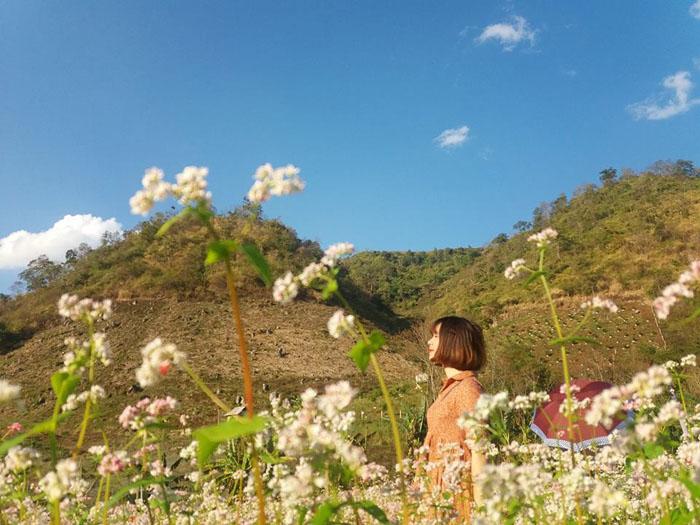 Nên đi du lịch miền Bắc mùa nào đẹp nhất - Mùa hoa cải trắng