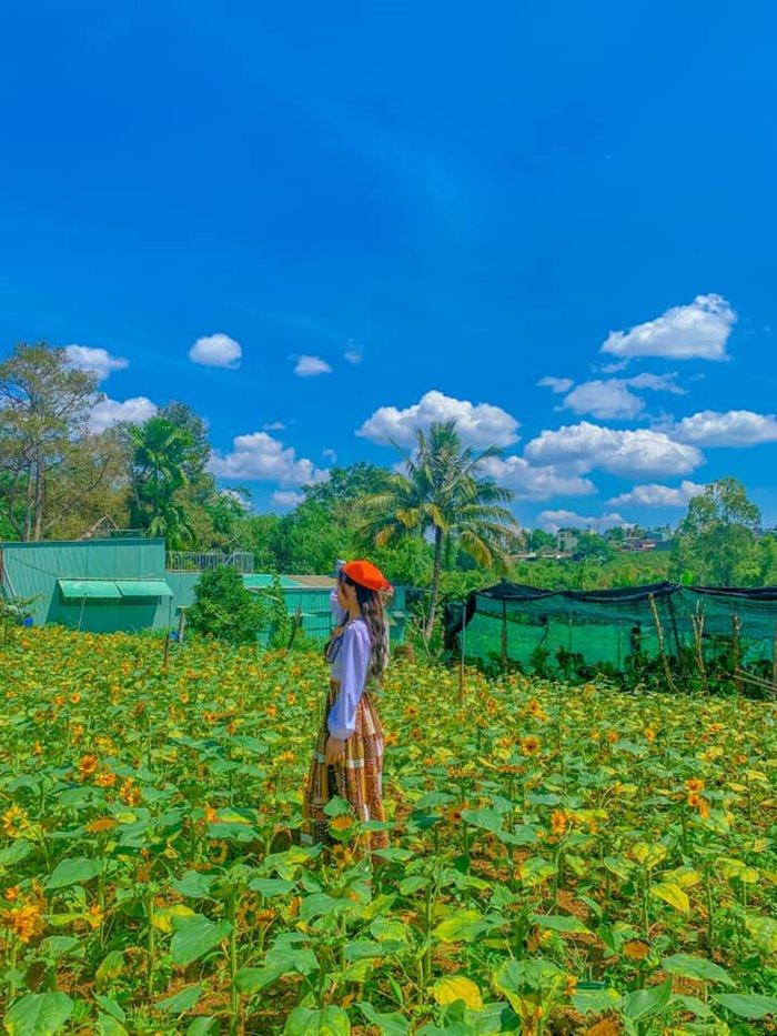 du lịch nông trại cối xay gió Gia Lai