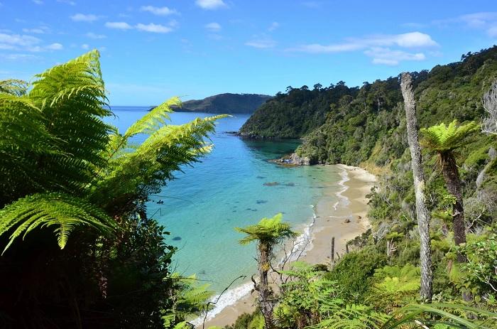 Wild beauty on Stewart Island