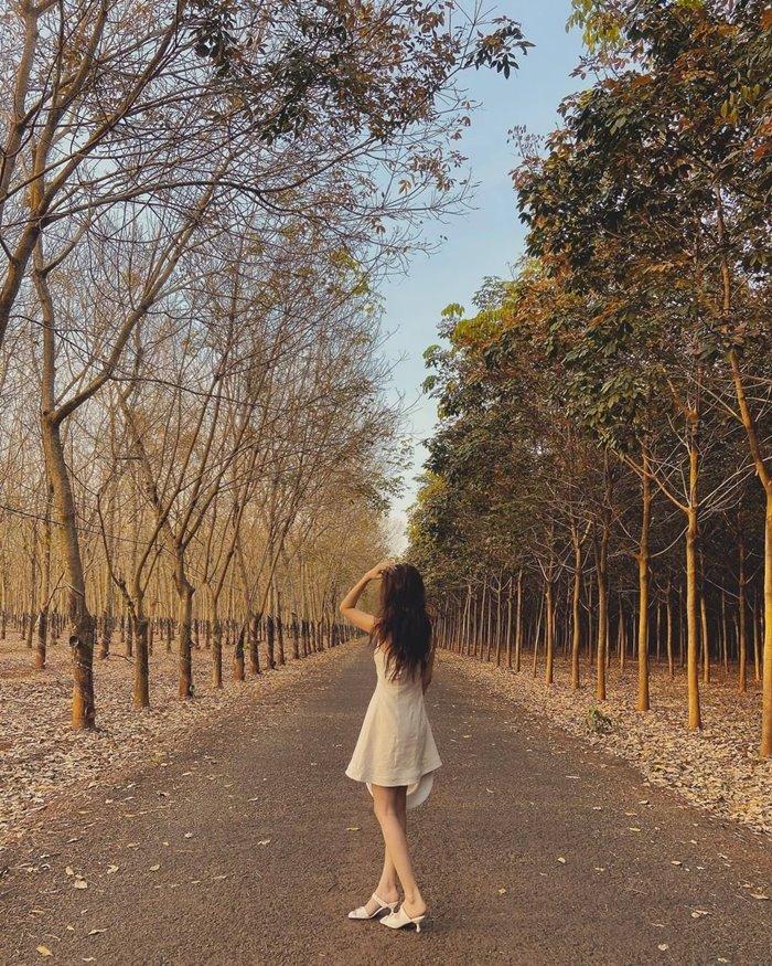 Check-in rừng cao su con đường đẹp ở Gia Lai