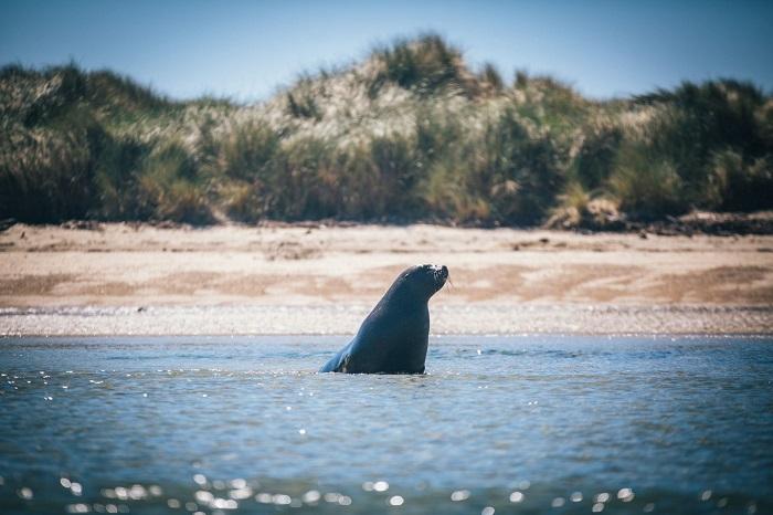 A sea lion - Stewart Island