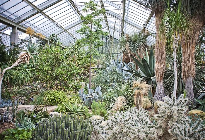 Nhà kính trồng các loại thực vật từ khắp nơi trên thế giới - Vườn bách thảo đẹp nhất thế giới
