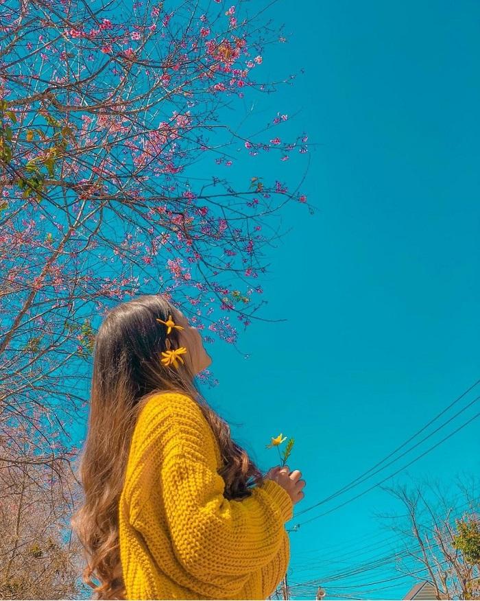 Tháng 1 là tháng bắt đầu mùa hoa nở rộ - du lịch Đà Lạt mùa nào đẹp
