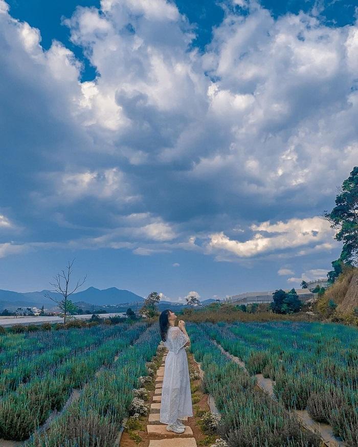 Vườn hoa lavender ở Đà Lạt - du lịch Đà Lạt mùa nào đẹp