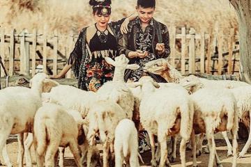Đồng cừu dưới chân núi Bà Đen - điểm sống ảo mới toanh ở Tây Ninh