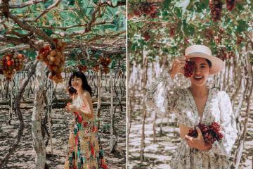 Dắt tay nhau đi 'sống ảo' khi du lịch vườn nho Ninh Thuận