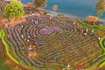 Giữa phố núi Kon Tum xuất hiện vườn hoa Long Loi đẹp đến nao lòng