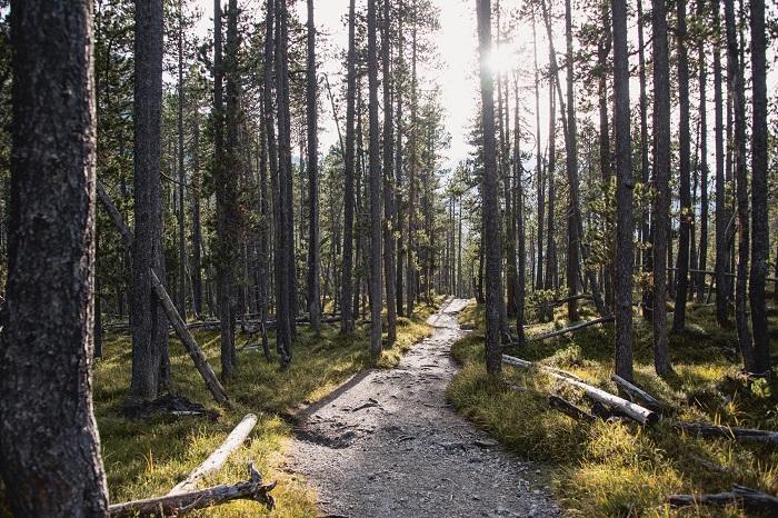 Rừng bên trong Vườn quốc gia Thụy Sĩ
