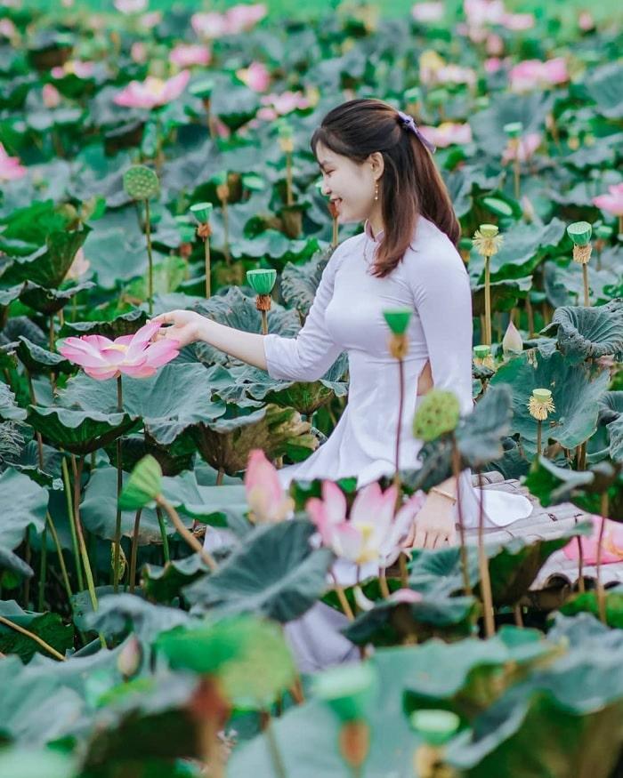 Big lotus - a special feature of Tay Son lotus pond đầm