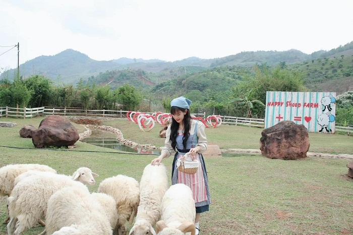 Vui chơi với đàn cừu tại khu du lịch Happy Land Mộc Châu