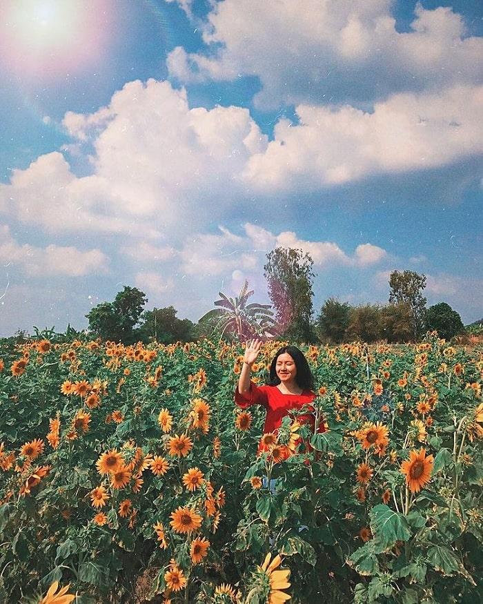 chỉnh màu - cách để ảnh chụp với vườn hoa hướng dương gần núi Bà Đen đẹp hơn
