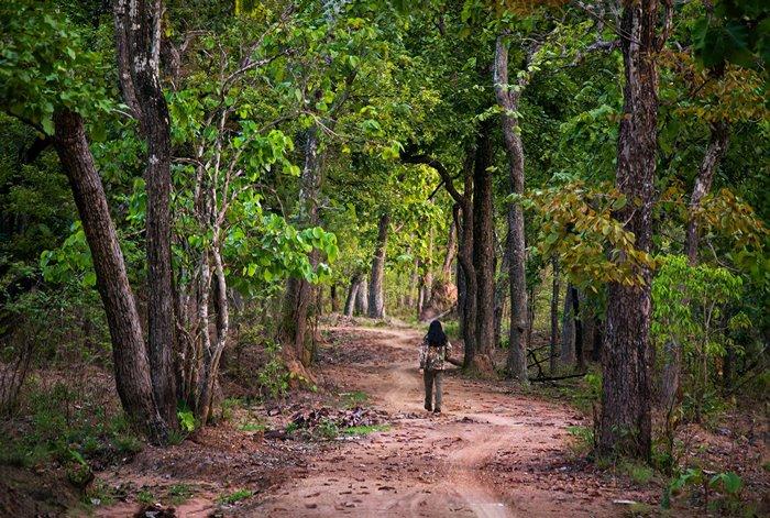 cảnh sắc vườn quốc gia Yok Đôn