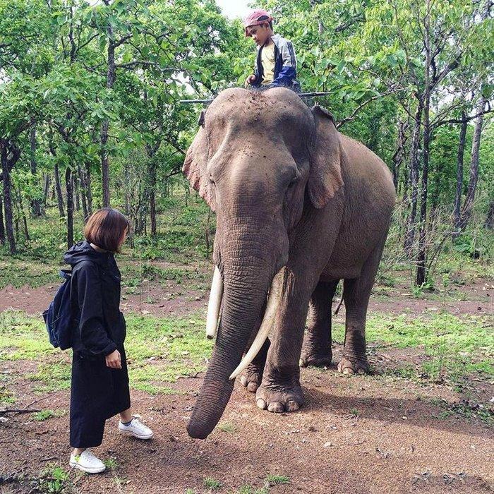 Cưỡi voi vườn quốc gia Yok Đôn