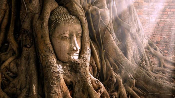 Tượng Phật nằm trong gốc cây