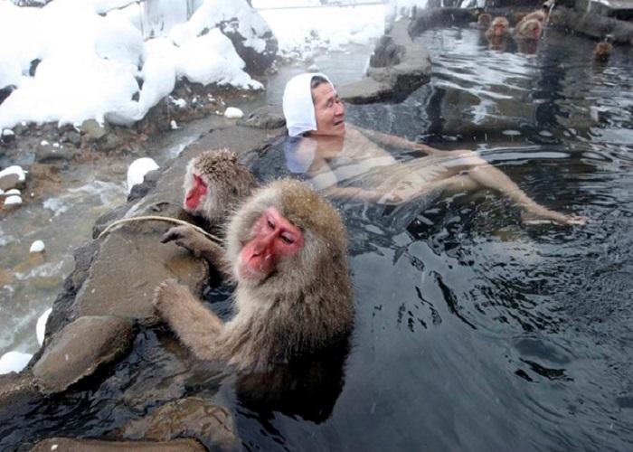 công viên khỉ tuyết Jigokudani