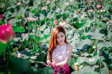 Chiêm ngưỡng mùa sen nở rộ với những hồ sen đẹp nhất Việt Nam
