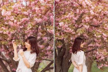 Điểm đến ở cố đô Gyeongju, vẻ đẹp của những mùa hoa