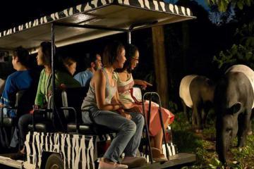 Chuyến đi nhớ đời tại vườn thú đêm Night Safari Singapore