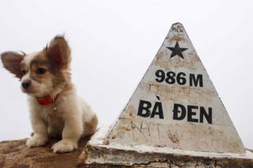 Trekking Núi Bà Đen - Tây Ninh cùng thú cưng