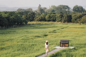 Phát hiện quán cà phê đẹp như phim điện ảnh giữa cánh đồng ở Chiangmai Thái Lan