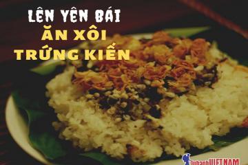 Xôi trứng kiến, món ăn lạ mà quen của người dân Yên Bái