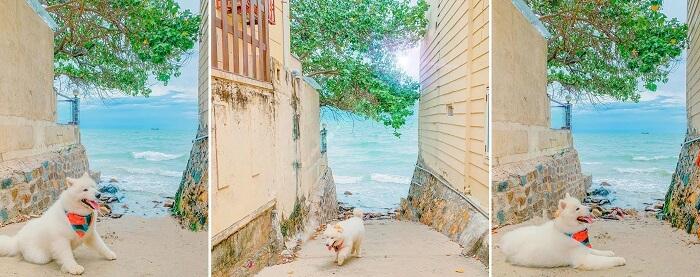 'Tan chảy' trước bộ ảnh du lịch Vũng Tàu cùng thú cưng siêu đáng yêu
