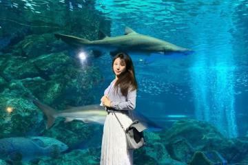 Khám phá nét độc đáo của công viên hải dương học COEX Hàn Quốc