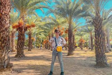 Vườn chà là Sa Đéc - thiên đường phủ sắc vàng cam đẹp như tranh vẽ