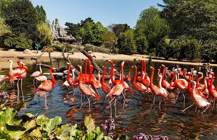 experience visiting the Tierpark Hagenbeck zoo