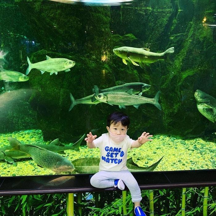 Nét độc đáo đặc sắc của công viên hải dương học COEX Hàn Quốc
